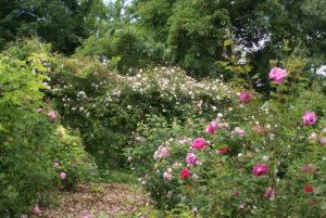 un giardino un po' selvaggio